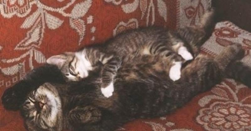 Коты во сне что означает