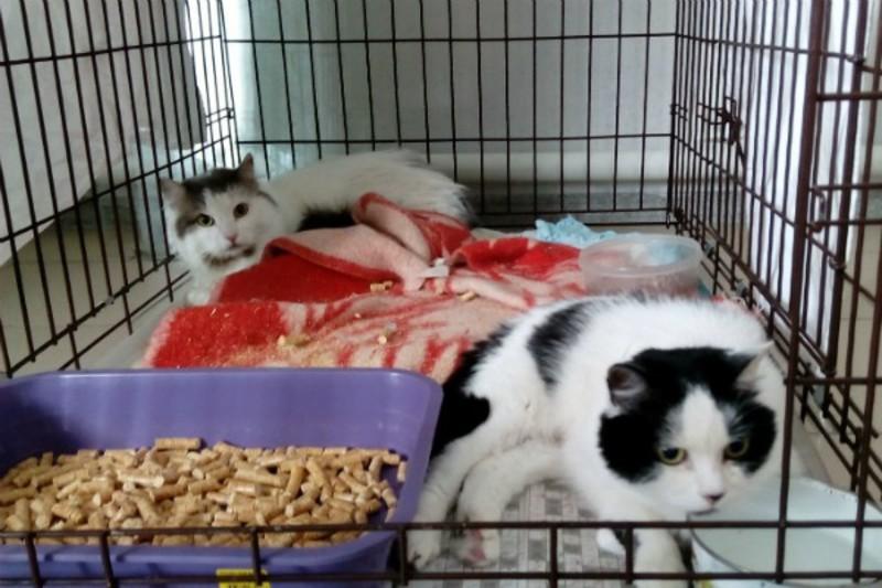 Сонник мертвая кошка во сне