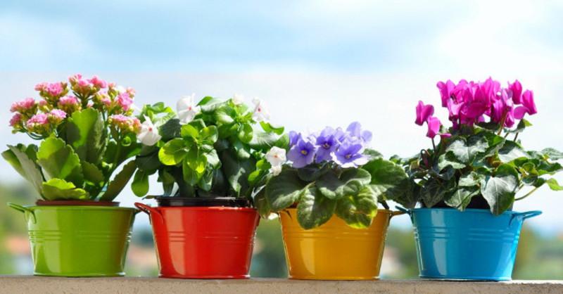 К чему снятся цветы в горшках на подоконнике