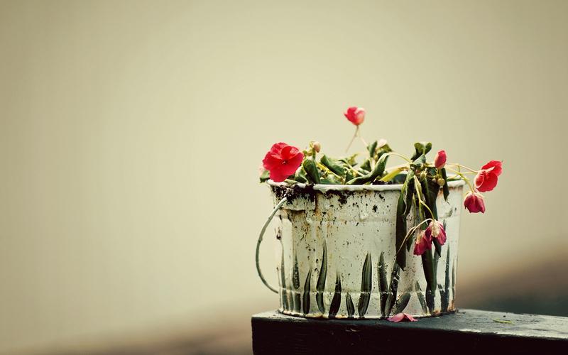 К чему снятся увядающие цветы в горшках
