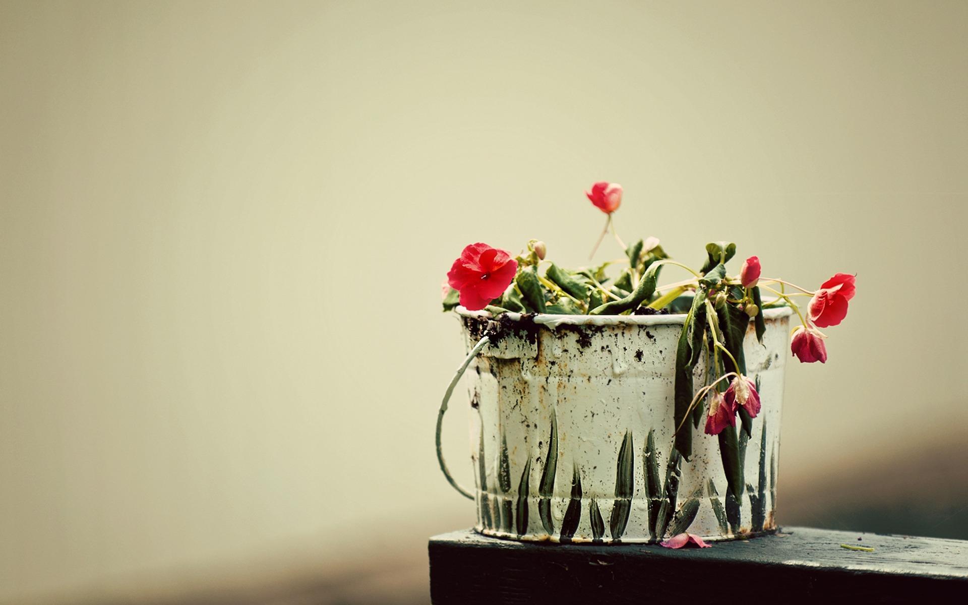 Если во сне поливать цветы