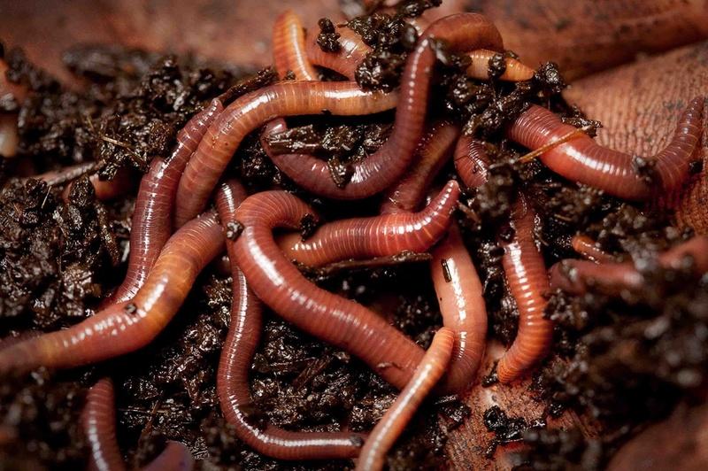 сонник миллера дождевые черви