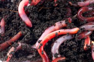 Как растолковать сон про червей