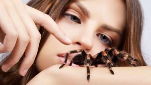 Как растолковать сон про пауков