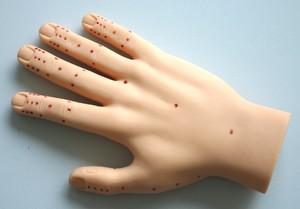 Точки на руке, отвечающие за органы, и их проекция на ладони