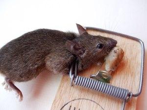 Толкование сна про мышей