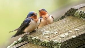 К чему в дом залетает птица