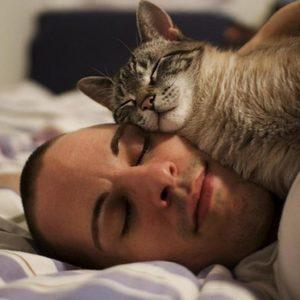 Почему кот ложиться на хозяина