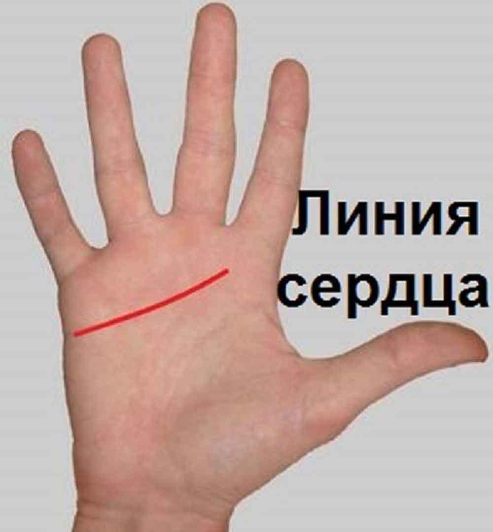 Линии на руке: что они означают? Как узнать свое будущее 66